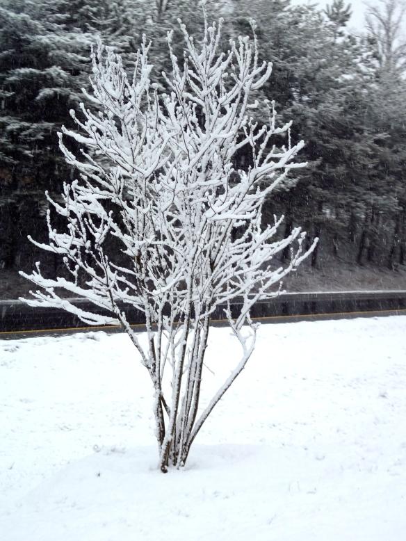 Blizzard CLT 2013