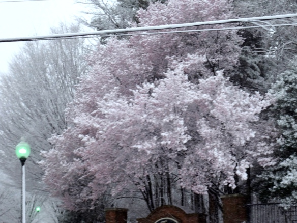Those are blooming trees covered in snow.  Global warming anyone?