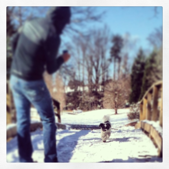 Cody's impromptu photo shoot in the melting snow. ;)