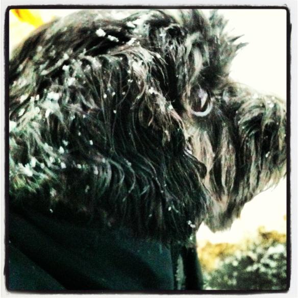 Cody in the snow