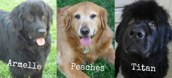 Sarahs Dogs