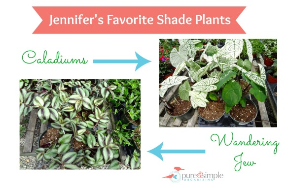 Shade Plants | Pure & Simple