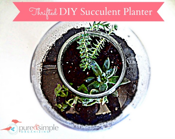 Thrifted DIY Succulent Planter Tutorial | Pure & Simple